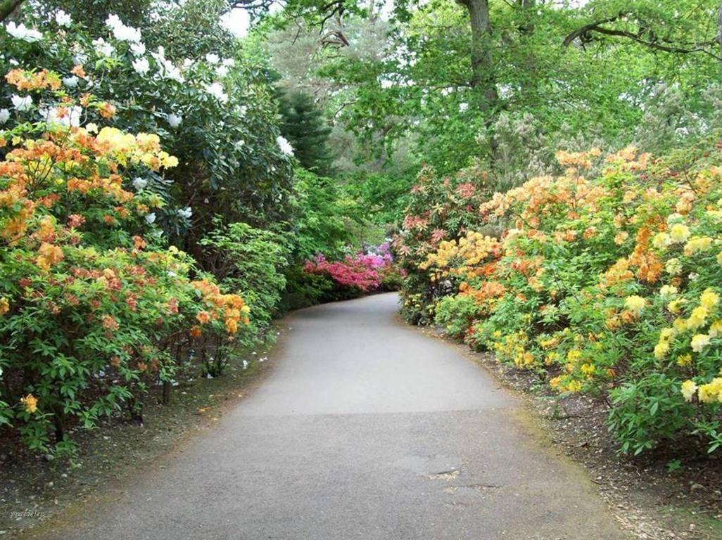 Jardin D 39 Exbury En Angleterre